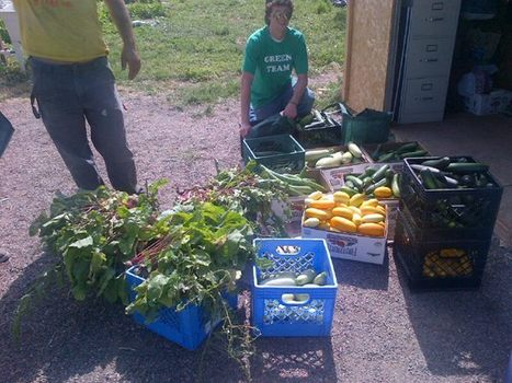 The @DenverRelief GREEN TEAM giving back to the community by harvesting veggies for EKAR farm. Bounty! #mmot | Inspirational and more | Scoop.it