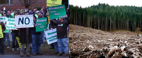 Harmonic Destruction  -- How Greens Justify Bioenergy's Assault on Nature | Feeding the Future | Scoop.it