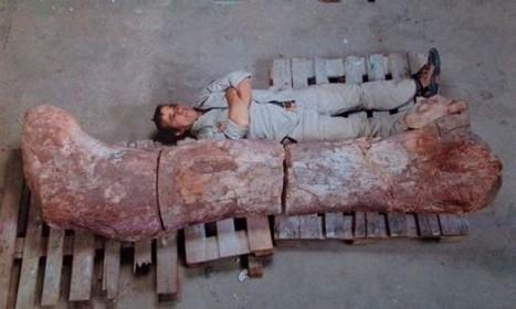 Βρήκαν τον μεγαλύτερο δεινόσαυρο που έζησε ποτέ στη Γη! | ΤΡΑΠΕΖΑ ΥΛΙΚΟΥ 2013-2014 | Scoop.it