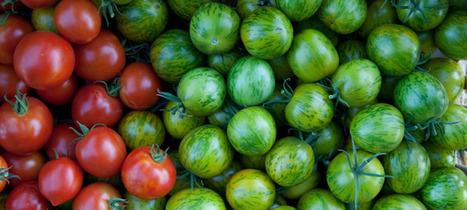 Start a Community Seed Project   Organic Farming   Scoop.it