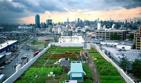 Flex Your Green Thumb at an Urban Rooftop Farm | Vertical Farm - Food Factory | Scoop.it