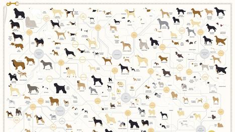 181 Dog Breeds On One Very Good Poster   Random   Scoop.it