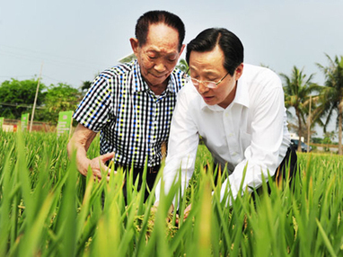 Le super riz en autosuffisance pour approvisionner la Chine - Quotidien du Peuple | sustainable development | Scoop.it