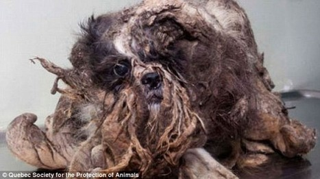 Rescued Stray Dog Thought To Be Pile Of Trash Gets Makeover  | Global Animal | Nature Animals humankind | Scoop.it