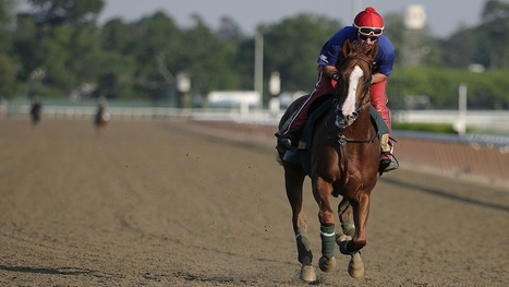 California Chrome Just Lost The Triple Crown, But He's Still Worth As Much As $10 Million   Digital-News on Scoop.it today   Scoop.it