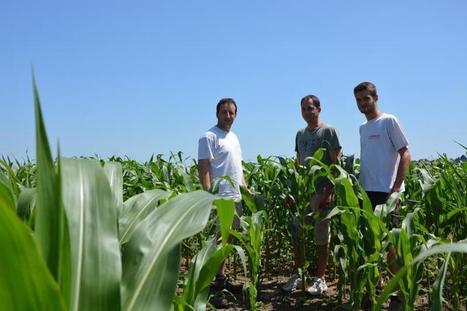 Les Mauges : bastion de la conservation des sols | Agriculture de Conservation des Sols | Scoop.it