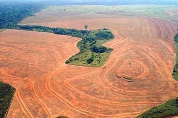 Brazil Amazon: New data reveal that annual rate of deforestation is up for first time in five years | GarryRogers NatCon News | Scoop.it