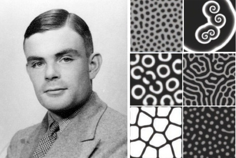 Alan Turing's Patterns in Nature, and Beyond | omnia mea mecum fero | Scoop.it