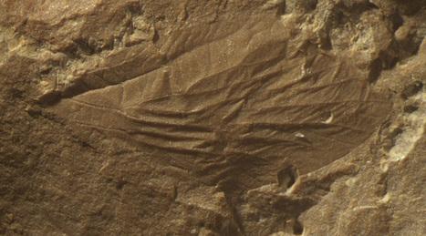 Des insectes modernes de plus de 300millions d'années | Nouvelles arthropodes | Scoop.it