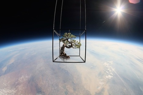 Japanese Bonsai Tree and Flowers Launched into Space in Incredible Journey | Art Installation | Scoop.it