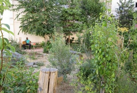Des arbres fruitiers rassemblent les habitants de La Chapelle, à Paris | The Blog's Revue by OlivierSC | Scoop.it