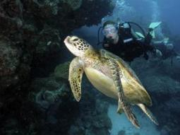 Aussies to create world's largest marine park - IOL SciTech | IOL.co.za | anti dogmanti | Scoop.it