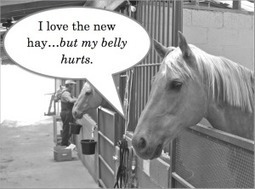 Horse Side Vet Guide™ | Equine Health in the Palm of Your Hand | Horse Health | Scoop.it