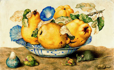 Food Art: Still Life with Mouse, by Italian Female Painter Giovanna Garzoni - The Rambling Epicure | The Rambling Epicure | The Rambling Epicure | Scoop.it