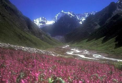 Essential Information For Trekking To Valley Of Flowers | AdventureIndiaGroup | Scoop.it