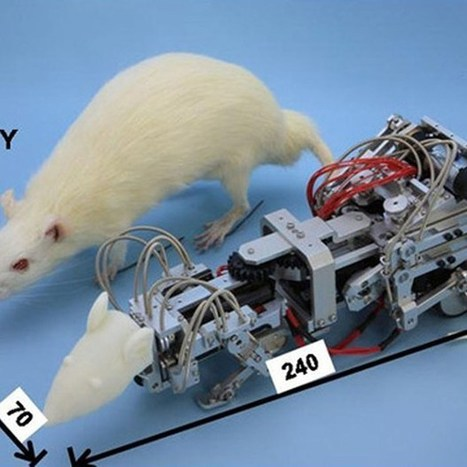 Tokyo team designs violent robot rat to bully live lab rats (Wired UK) | mHealth Apps for Brain and Behavior | Scoop.it