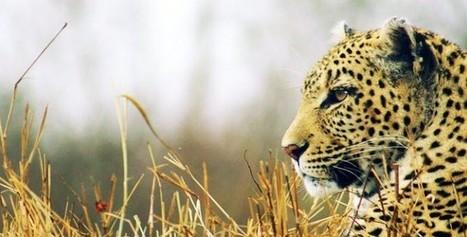 Oplev Storhed, Oplev Victoria Falls!   Rejser Afrika   Scoop.it