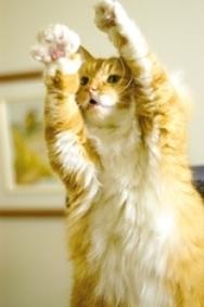 Dans la tête d'un chat | CaniCatNews-actualité | Scoop.it