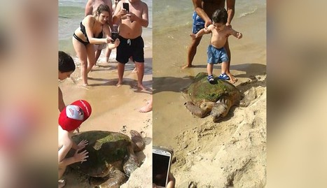 Turtle Dragged From Ocean So Children Can Stand On Him | Nature Animals humankind | Scoop.it