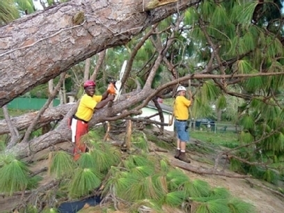 Don't Let Those Trees Mess Your Yard! Tree Care Services Can Help You Solve Your Problem! | Cleaning My Sorroundings | Scoop.it