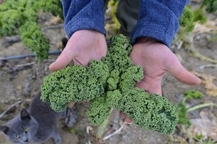 Analytics and Big Data: The New Kale? Thomas Davenport | Agrobrokercommunitymanager | Scoop.it