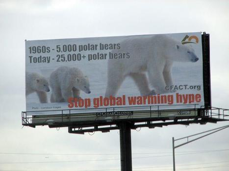 Polar bears have not been harmed by sea ice declines in summer – the evidence | Climat | Scoop.it
