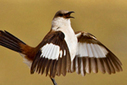 """All the world's rarest birds in one book: photo contest enlivens new guide 