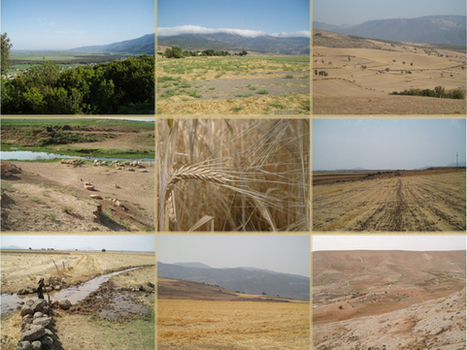 Archaeobotanists probe ancient grains to map drought stress, human responses in Ancient Near Eastern societies | Sustain Our Earth | Scoop.it
