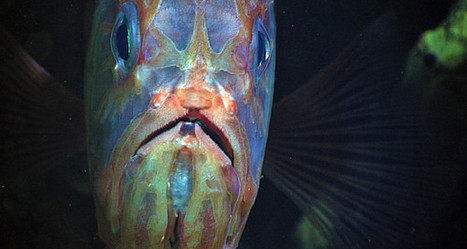 Fish Face Grim Consequences from Climate Change - The Daily Catch | Environmental issues | Scoop.it