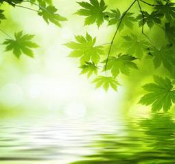 Quantum mechanics explains efficiency of photosynthesis | Amazing Science | Scoop.it