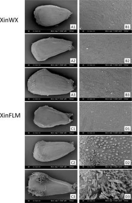 Comparative Transcriptomics Reveals Jasmonic Acid-Associated Metabolism Related to Cotton Fiber Initiation | Plant Genomics | Scoop.it
