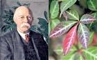 In praise of plant hunter Augustine Henry - Telegraph | Herbaria | Scoop.it