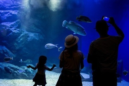 Aquariums linked with important well-being and health benefits | alternative health | Scoop.it