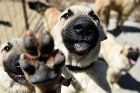 Pttr : une application pour sauver les animaux des refuges | Efficycle | Scoop.it