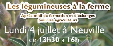 Les légumineuses à la ferme le 4 juillet à Neuville | Agenda HAINAUT DEVELOPPEMENT | Scoop.it