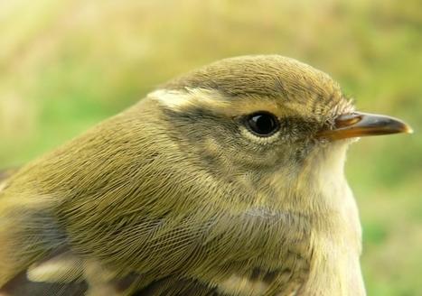 Signals between species help survival   Nature   The Earth Times   birding   Scoop.it
