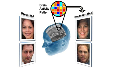 Yale Researchers Reconstruct Images of Faces Using fMRI Scans | Systems Theory | Scoop.it