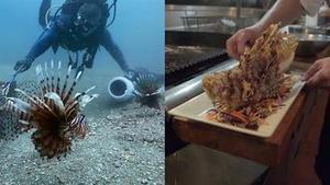 How Eating Venomous Lionfish Helps the Environment | Biodiversity protection | Scoop.it