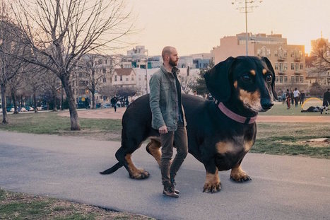 Guy Photoshops Tiny Dog to Reflect How Big She Thinks She Is | Le It e Amo ✪ | Scoop.it