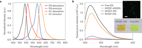 Enhanced energy transport in genetically engineered excitonic networks : Nature Materials : Nature Publishing Group   plant cell genetics   Scoop.it