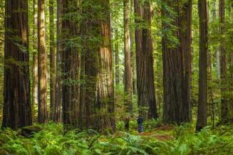 A first-blush with forest ecosystems and wildland biodiversity. | Farming, Forests, Water, Fishing and Environment | Scoop.it