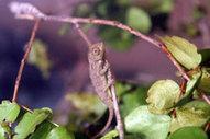 Control y Monitoreo de Especies Invasoras   Parque Nacional Everglades de Florida USA   Scoop.it