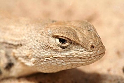 Texas Republicans attack critical thinking, gays … and lizard ... | Wings and Weights | Scoop.it