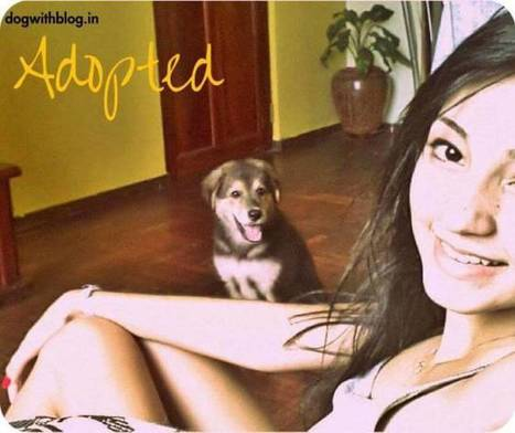 Adopt a dog India Dog With Blog | dog with blog | Scoop.it