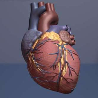 Higher resting heart rate linked to increased risk of death from all causes | Sustain Our Earth | Scoop.it