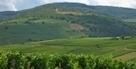 La route du Champagne en fête - Le Figaro | Act... | La Route du Champagne en Fête (@Route_Champagne | Scoop.it
