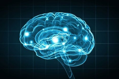 Neural Pathway Responsible for Opioid Withdrawal Discovered | the plastic brain | Scoop.it
