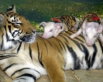 4 Unusual Animal Friendships, Why Can't We All Just Get Along? | Animal Welfare | Scoop.it