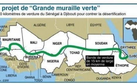 Grande Muraille Verte: le Sénégal en tête avec plus de 40.000 hectares reboisés - L'information en temps réel 24h/24 –7j/7 L'information en temps réel 24h/24 –7j/7 | Afrique: développement durable et environnement | Scoop.it