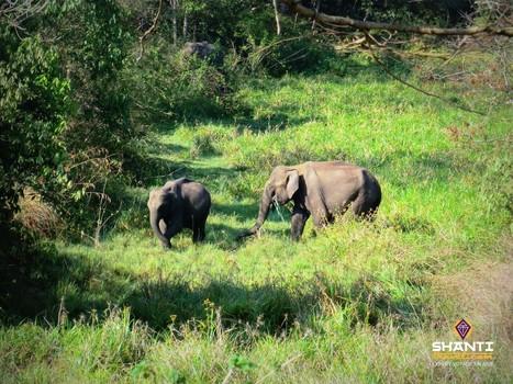 Safari à Periyar en Inde du Sud : une journée « vie sauvage » au Kerala | Actu & Voyage en Inde | Scoop.it